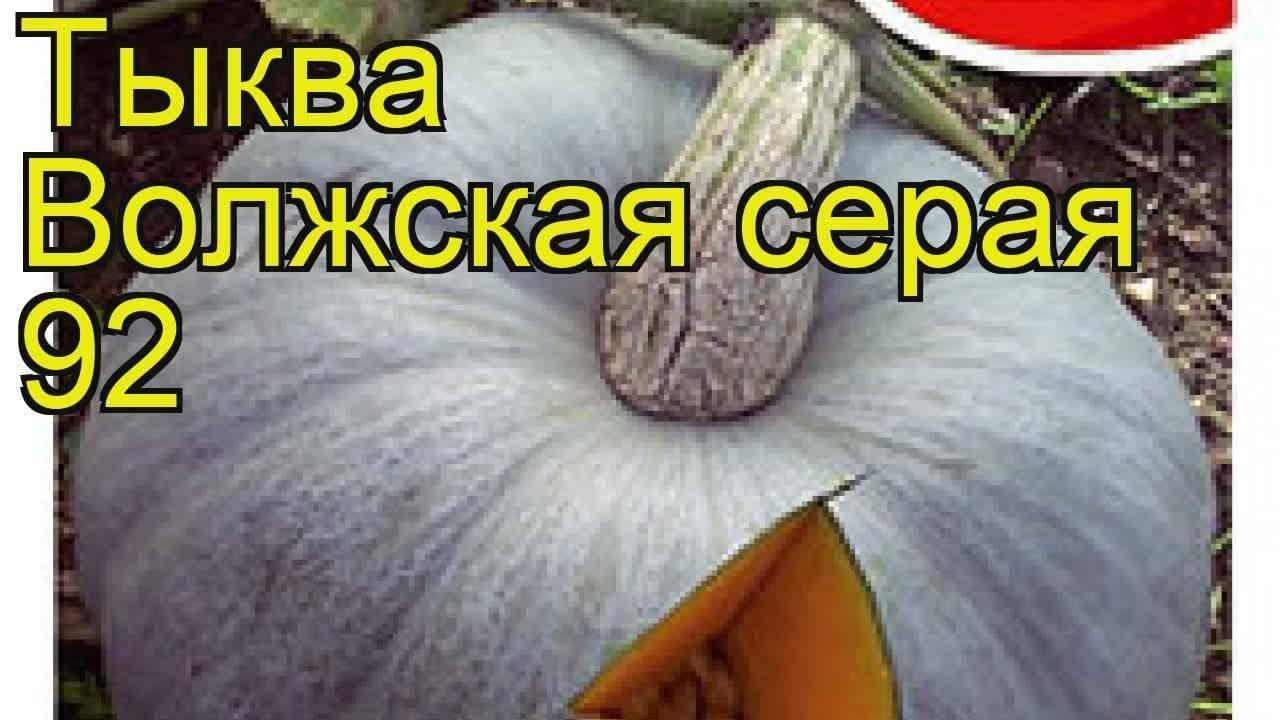 Тыква Волжская серая: как выглядит, характеристики и описание сорт