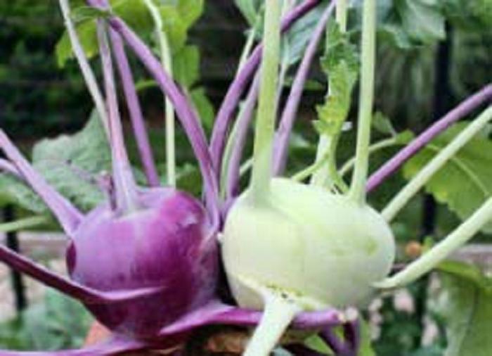 Кольраби: выращивание и уход за растением