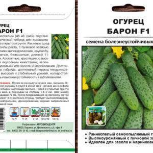 Сорт огурцов эколь: характеристика и описание сорта, особенности выращивания и ухода