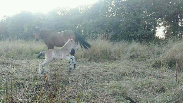 Беременность у лошади