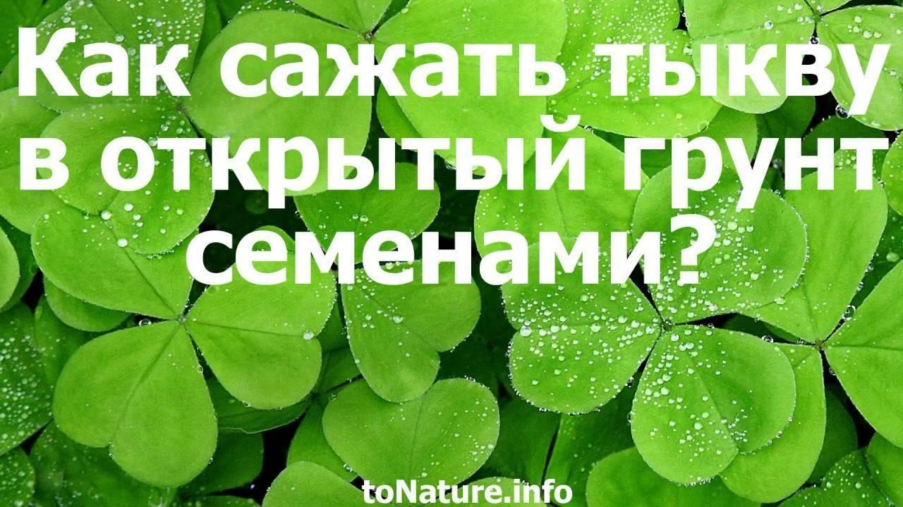 Как выращивать тыкву в открытом грунте и какие сорта выбрать?