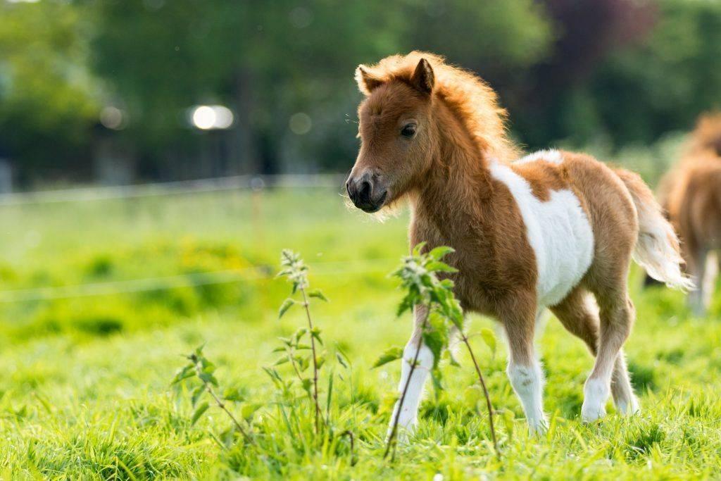 Чем кормить лошадь?