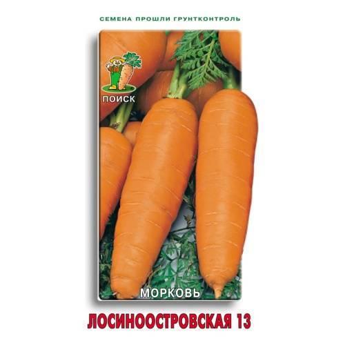 Несложная агротехника, но достойный урожай: морковь лосиноостровская 13