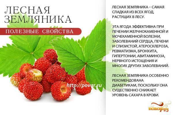Ягодный календарь: когда и какие ягоды собирать