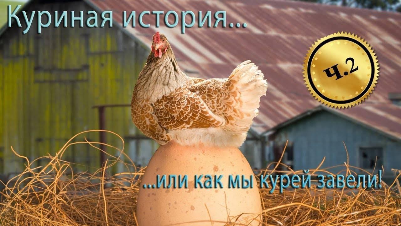 Лучшие мясо-яичные породы кур. описание, продуктивность, характеристика с фото и видео