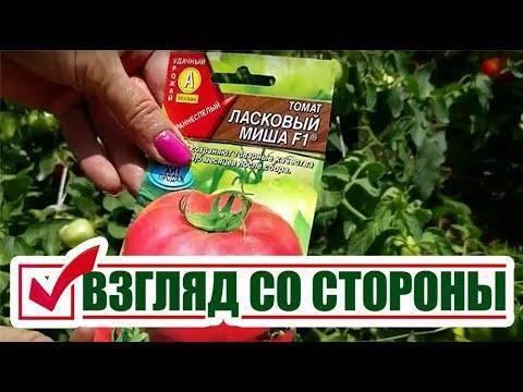 Сорт томата «киш миш красный f1»: фото, видео, отзывы, описание, характеристика, урожайность