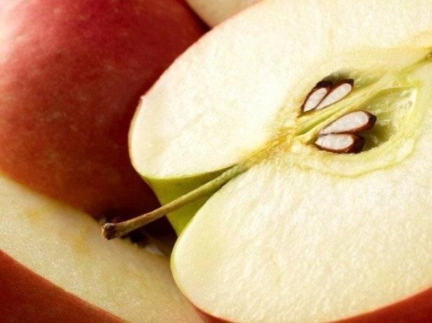 Как вырастить большое дерево яблоню из маленькой семечки в домашних условиях
