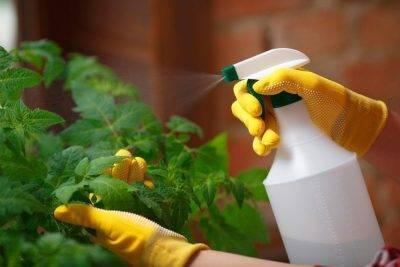 Первая обработка сада после зимы: побелка и опрыскивание — защита от вредителей и болезней!