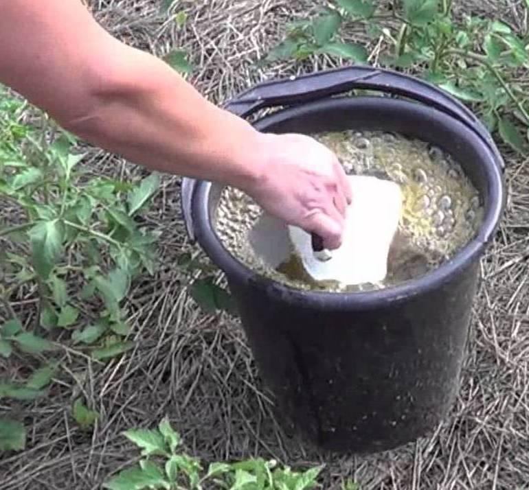 Народные средства – самая полезная подкормка для кабачков