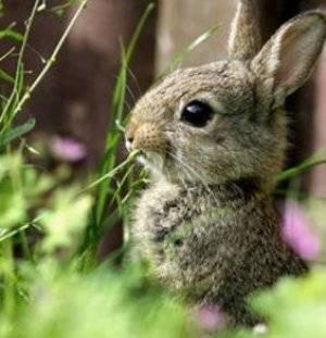 Какую траву можно и нельзя давать кроликам в свежем виде