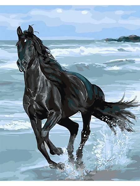 Черная лошадь — как выбрать, особенности содержания, породы, применение и характер вороных (95 фото)