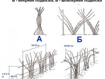 Правила и особенности посадки малины весной