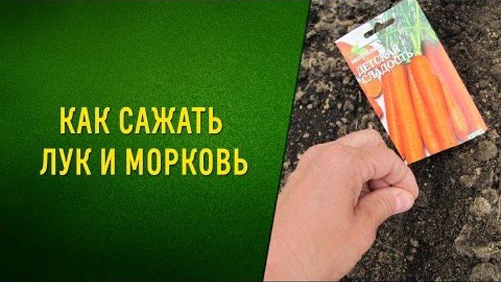 Морковь и лук на одной грядке: схема посадки и можно ли их вообще сажать рядом, а также когда лучше всего это делать и как ухаживать за растениями?