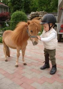Мини-лошади – породы и особенности содержания
