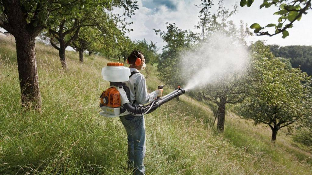 Чем обрабатывать яблони от насекомых-вредителей и болезней?