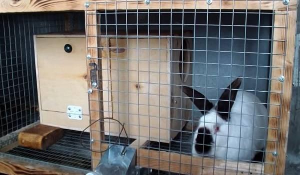 Как самостоятельно соорудить маточник для кролей