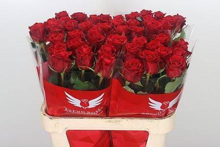 Розы флорибунда — лучшее украшение сада