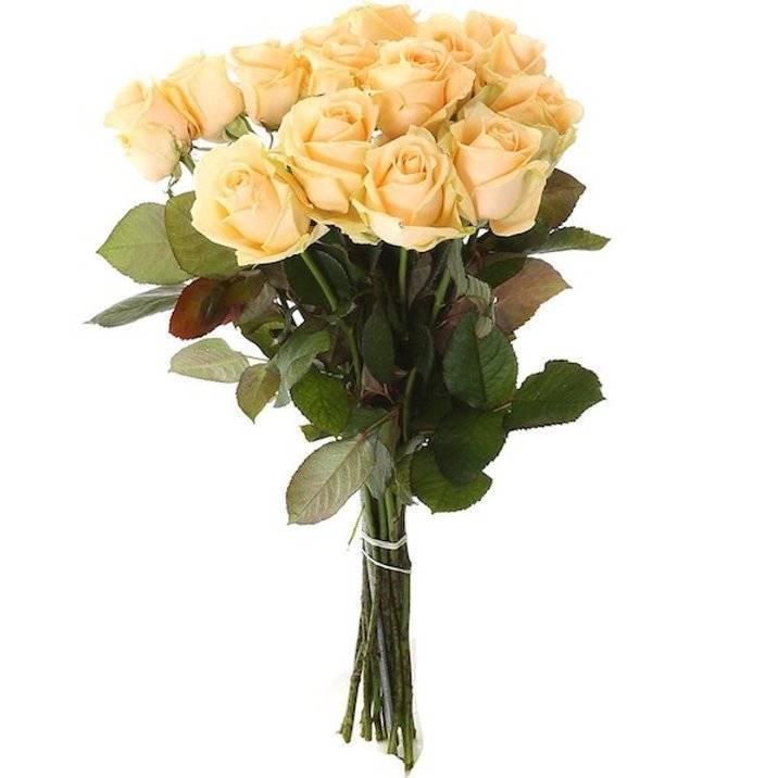 Роза аваланж: описание и характеристики сортов, выращивание и размножение с фото