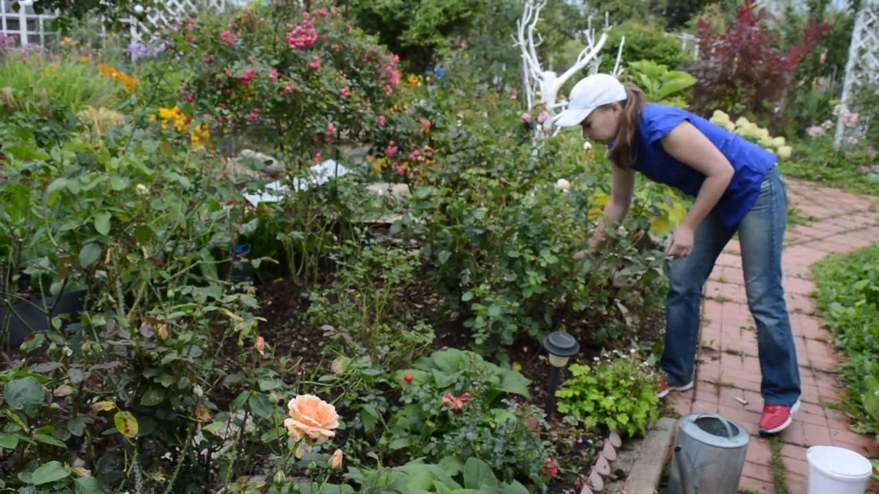 Подкормка растений в августе, обрезка деревьев и винограда, сбор урожая, борьба с вредителями