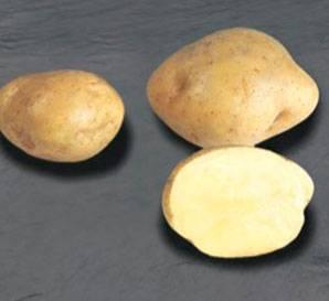 Лучшие скороспелые сорта картошки для россии — характеристика