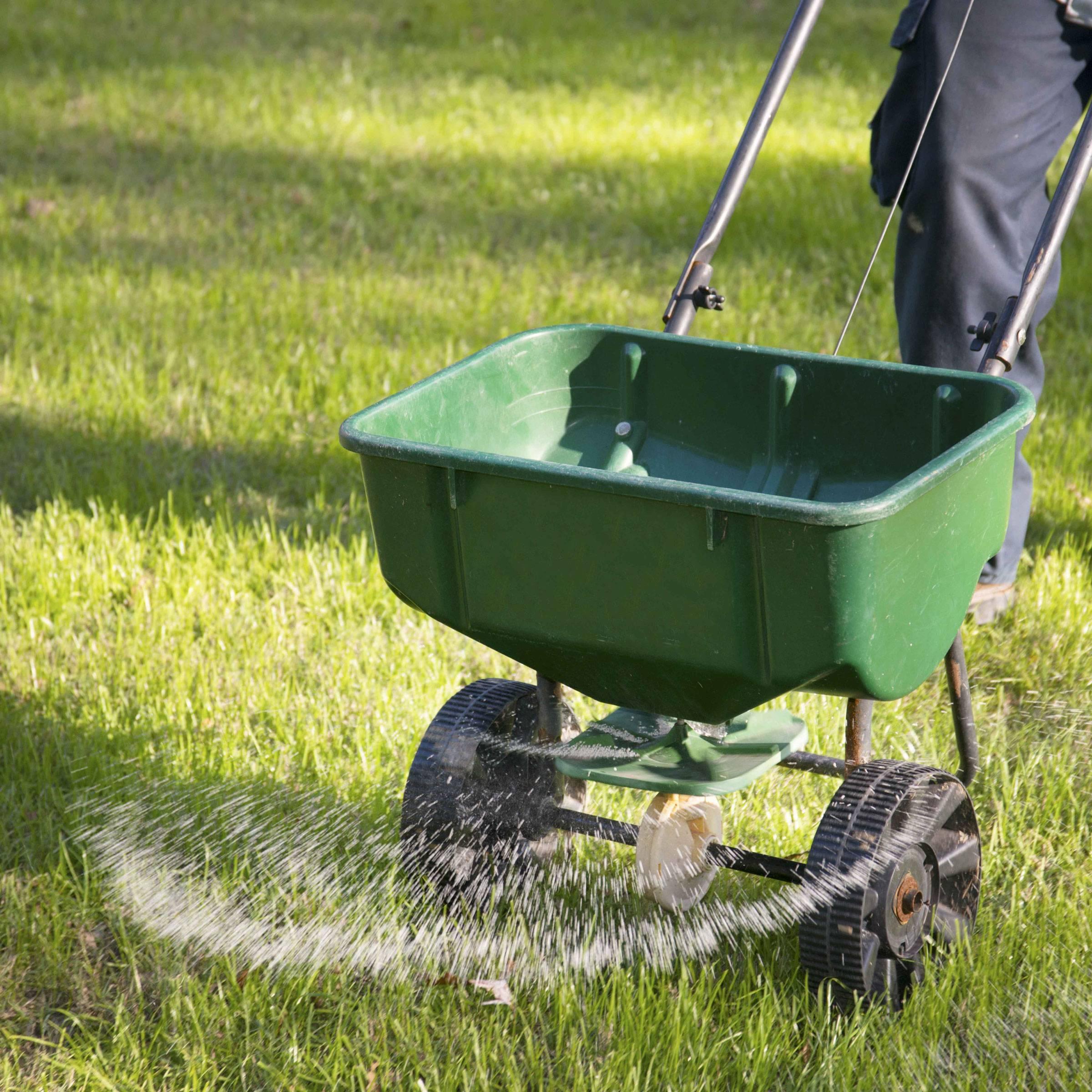 Удобрения для газона: выбираем чем лучше подкармливать весной