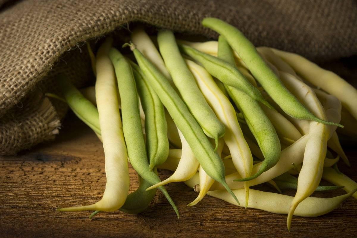 Спаржевая фасоль: особенности выращивания и ухода в открытом грунте