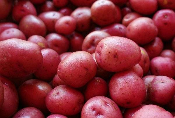 Характеристика и описание картофеля «любава»