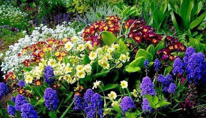 Чем подкормить розы весной и летом для пышного цветения