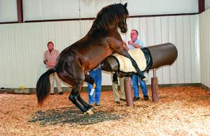 Любовь у животных — как спариваются лошади