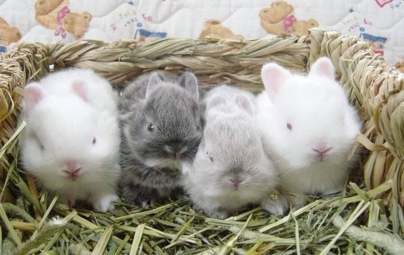 Кормление крольчат без крольчихи