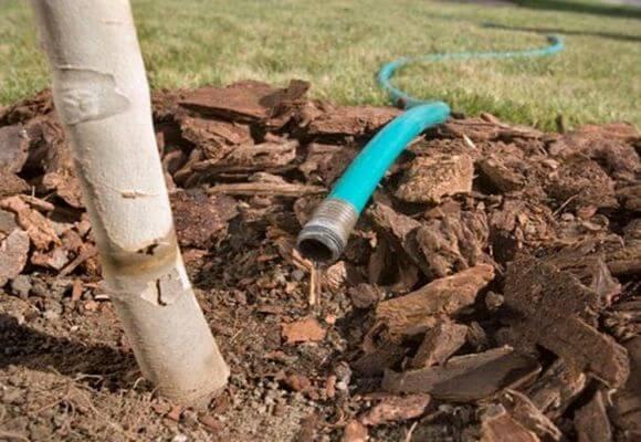 Как правильно подкормить яблони весной: чем, и когда удобрять деревья в саду - общая информация - 2020