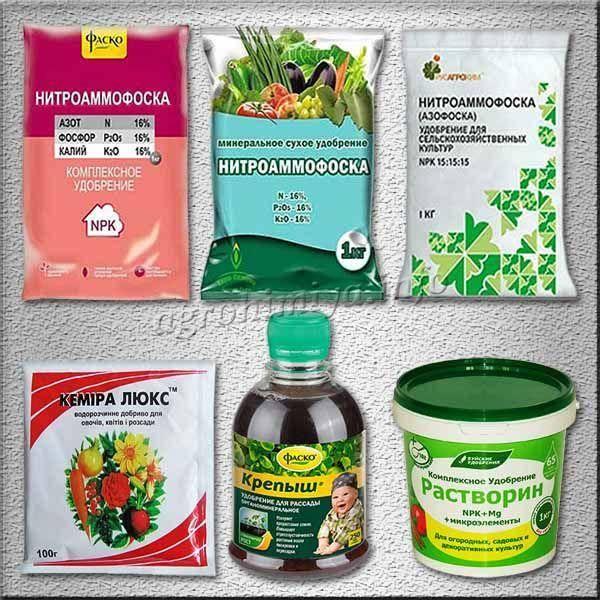 Удобрения для томатов в теплице органические