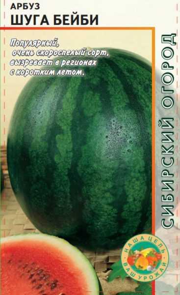 Как вырастить арбузы и дыни в подмосковье и собрать отличный урожай