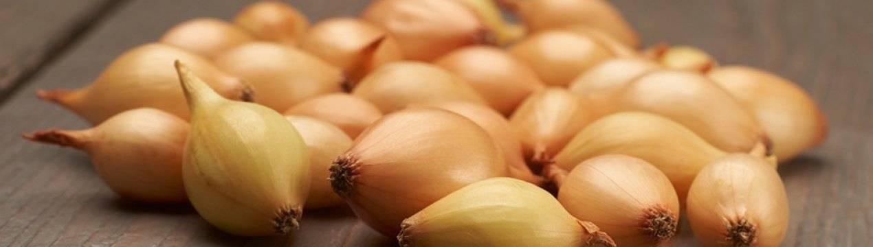 Как сохранить лук-севок до весенней посадки