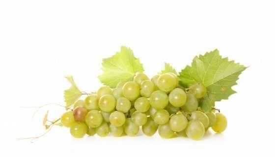 Морозостойкие неукрывные сорта винограда