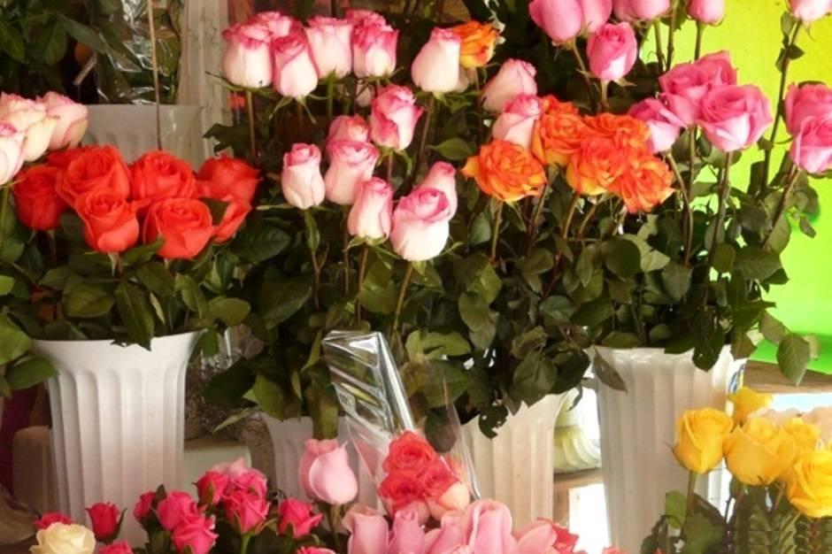 Как правильно вырастить розу в картошке?