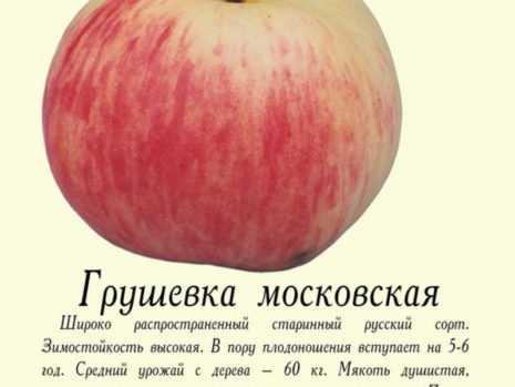 Яблоня грушовка ранняя: описание сорта и его фото