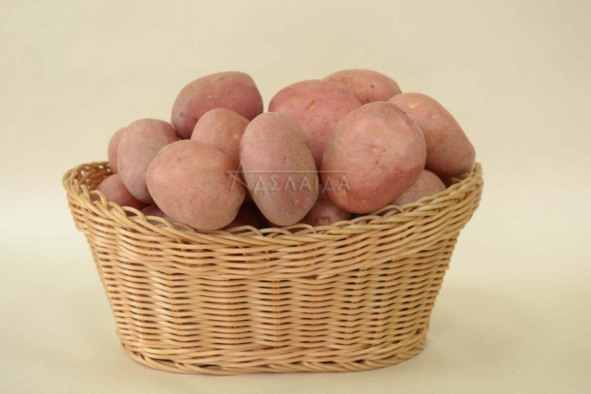 Описание сорта картофеля эволюшн