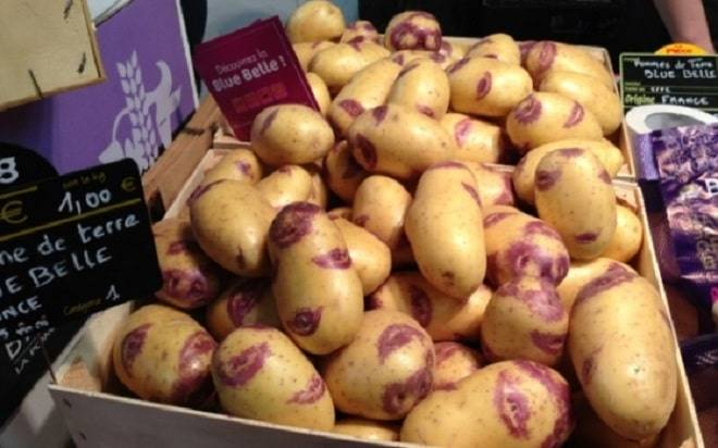Сорт картофеля синеглазка: характеристика