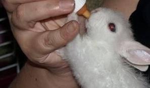 Почему крольчиха отказывается кормить крольчат и как решить эту проблему