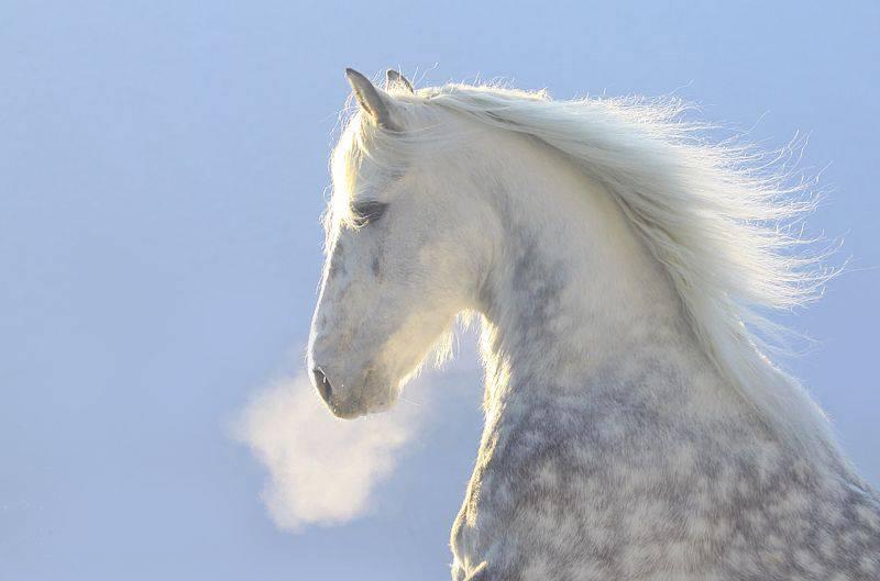 Об орловском рысаке: особенности коней орловской рысистой породы