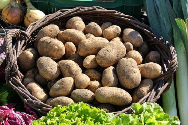 Можно ли сажать картофель из магазина на участке?