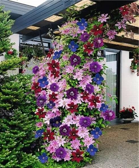 Вьющиеся цветы для дома и сада: обзор, описание, посадка и уход