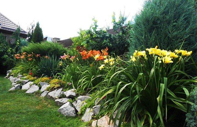 Лилейники в садовом дизайне – примеры красивого и необычного украшения участка