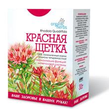 Красная щетка – лечебные свойства и противопоказания, применение. трава красная щетка для женщин и мужчин