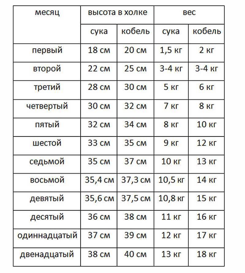 Сколько должен весить кот в зависимости от возраста и породы