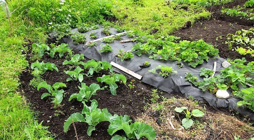 Спанбонд – как правильно выбрать и использовать агроволокно