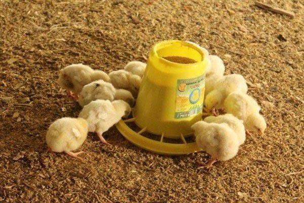 Состав комбикорма для кур несушек - самая подробная информация!