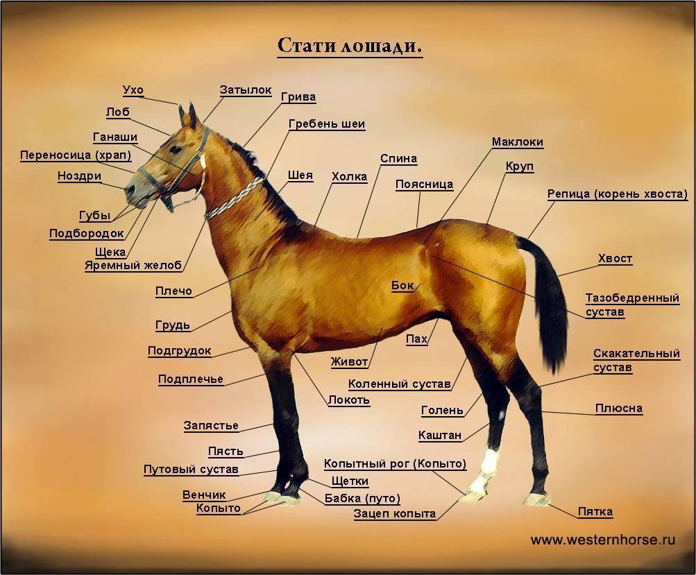 Подбор лошади, выбор лошади по параметрам