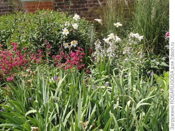 Как сажать  семенами комнатные лилии: посадка и уход, как и когда пересаживать?